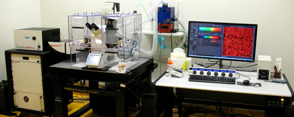 confocal LEICA SP8 gSTED